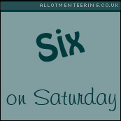 Six on Saturday – August 25th